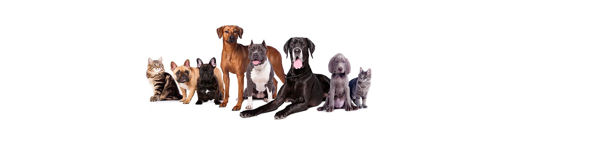 nutrapro - Gesundheit Vitalität für Hunde und Katzen